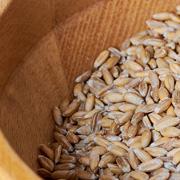 Espelta: el grano ancestral